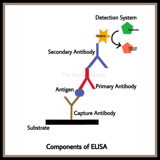 Components of ELISA
