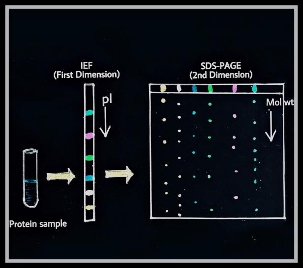 2D-PAGE proteome