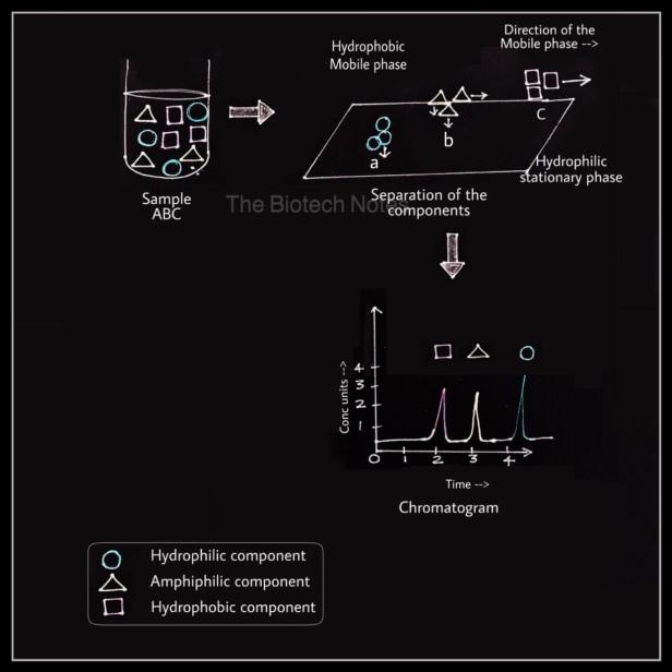 Chromatography hydrophilic hydrophobic