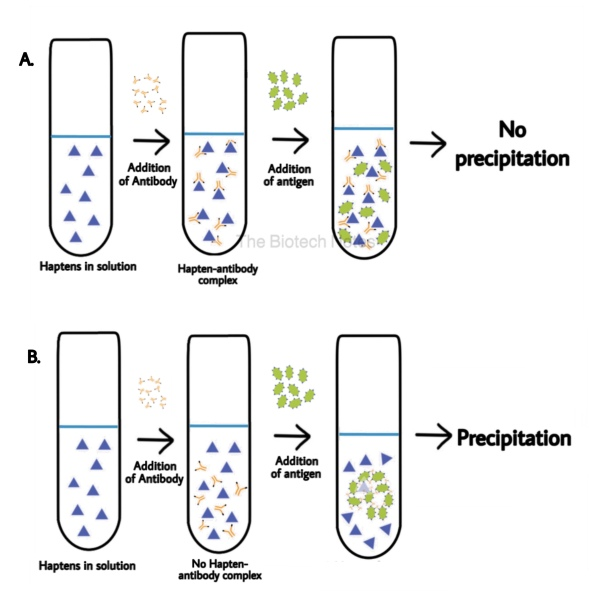 Immunoprecipitation- P1