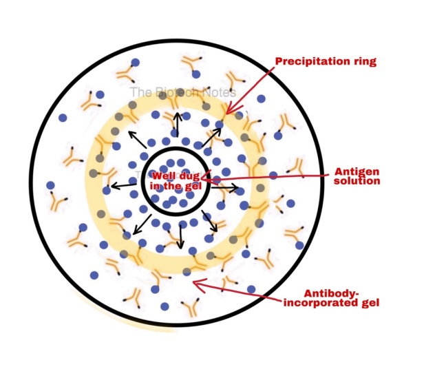 Single Radial Immuno Diffusion